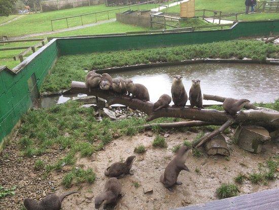 Tamar Otter and Wildlife Centre: photo1.jpg