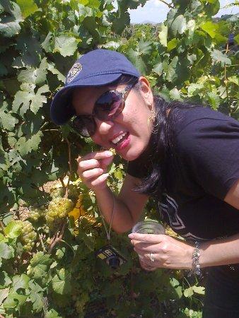 degustando uvas