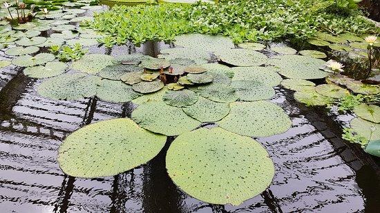 Botanischer Garten Muenchen-Nymphenburg : Botanischer Garten