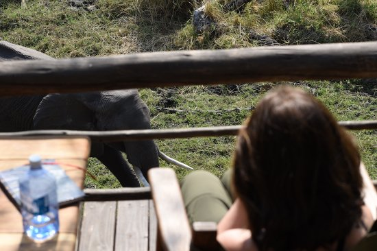 Delta Camp: Elephant from the treehouse