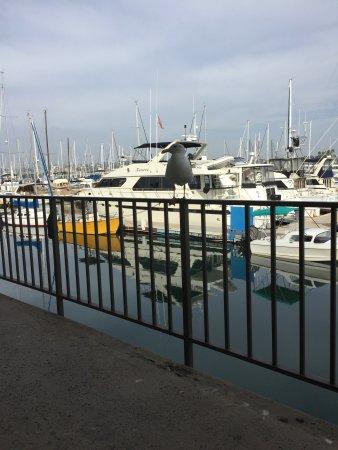 Hilton San Diego Airport/Harbor Island: Breakfast with the Gull
