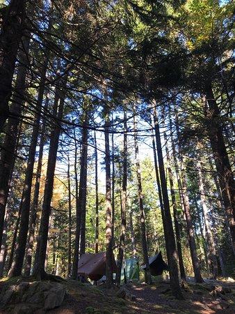 Blackwoods Campground: photo1.jpg