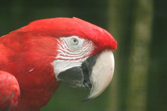 Papaikou, HI: Bird of Paradise :)