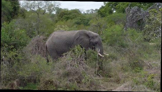 Hazyview, Sudafrica: 20171018_100124_large.jpg