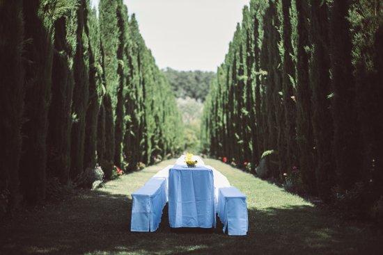 Der Zypressenhain Im Garten Des Weingutes Picture Of Weingut