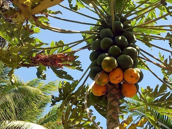 Maui Palms Photo