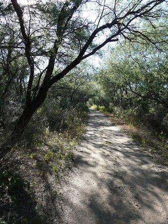 Tumacacori, AZ: Footpath to the river