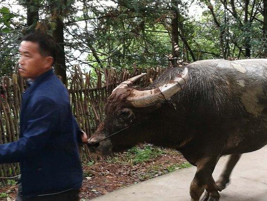 Congjiang County, China: mmexport1508421332804_large.jpg