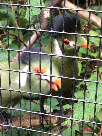 Linton Zoo: photo7.jpg
