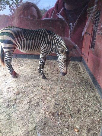Linton Zoo: photo8.jpg