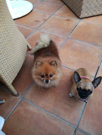 Augusta Spa Resort: Mis mascotas contentas en la terraza de la cafeteria se despiden ¡¡hasta la próxima¡¡