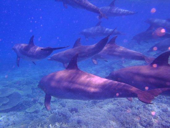 Nager avec les dauphins photo de envie d 39 egypte for Nager avec les dauphins nice