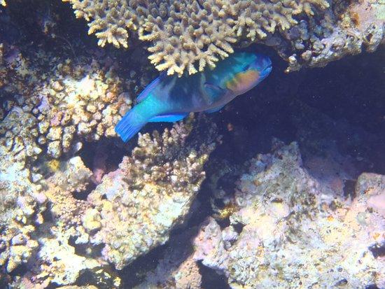 Nager avec les dauphins picture of envie d 39 egypte for Nager avec les dauphins nice