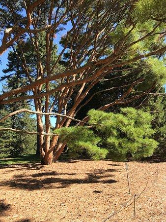 Morton Arboretum: photo0.jpg