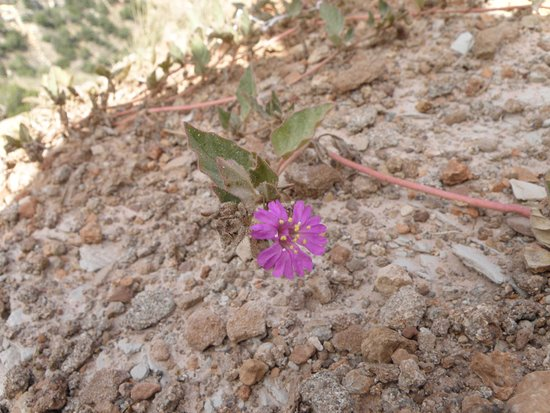 Canyon, TX: Another unidentified wildflower.