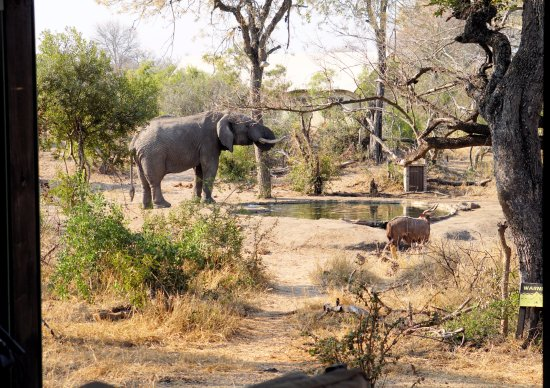 Manyeleti Game Reserve-billede