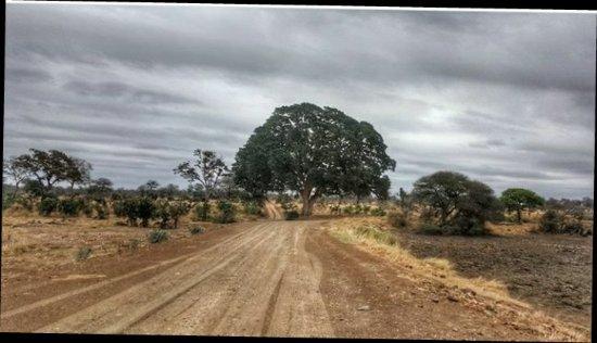 Kruger National Park: received_10213352253152676-01_large.jpg