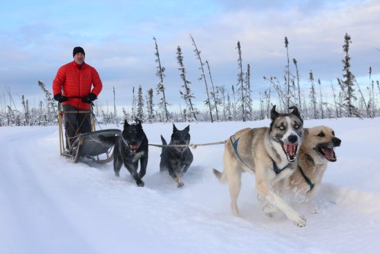 ‪Alaska Mushing School‬