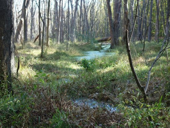 Mentor, OH: The trail along the marsh rim