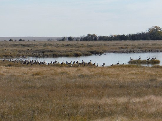 Maxwell, NM: hundreds of Sandhill cranes south of Lake 13