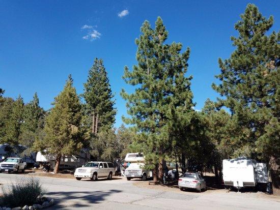 Pine Tree Rv Park Campground Reviews Big Bear Region
