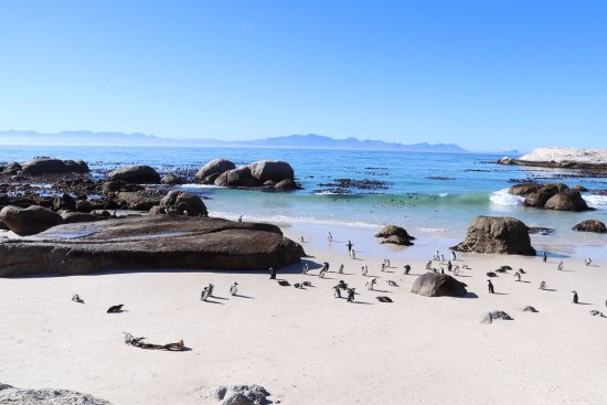 Cape Town Day Tours: photo0.jpg