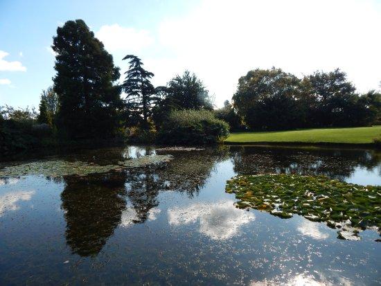 Челмсфорт, UK: pond