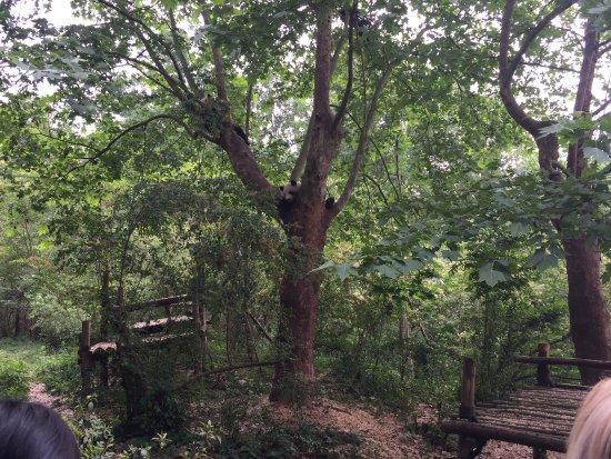 Inside the park area