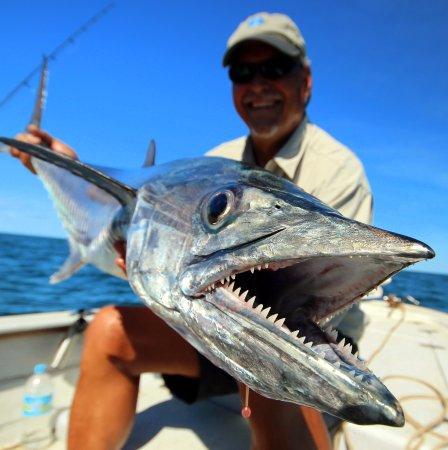 Cooktown, Australie : mackerel