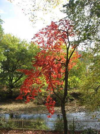 Oieregi, إسبانيا: otoño en Bertiz