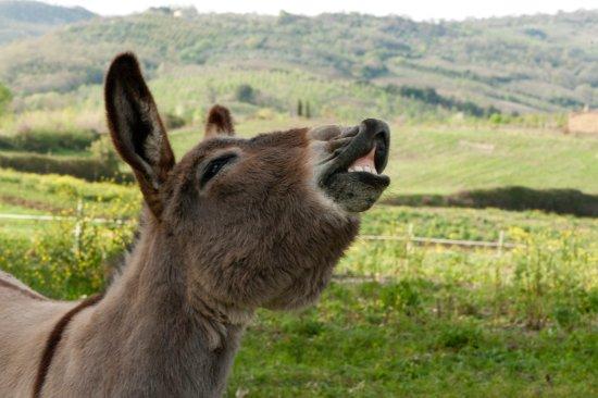 Scansano, Italien: il nostro asinello Pippo