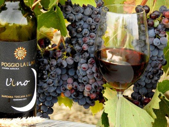 Scansano, Italy: Uva e Vino