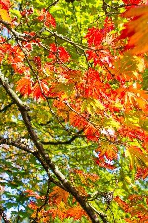 Leverkusen, Alemania: Herbstfarben