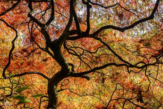Leverkusen, Alemania: Herbstfarben 2