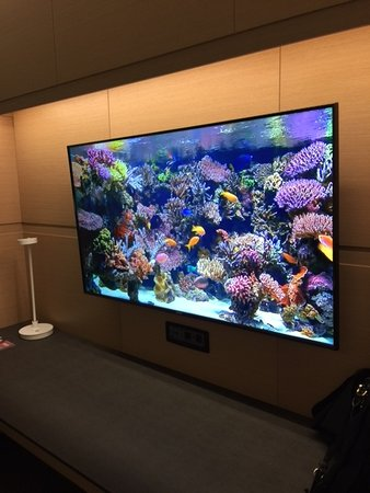 Oxon Hill, MD: Aquarium channel on large screen tv in room
