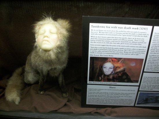 Boscastle, UK: Ведьминские превращения