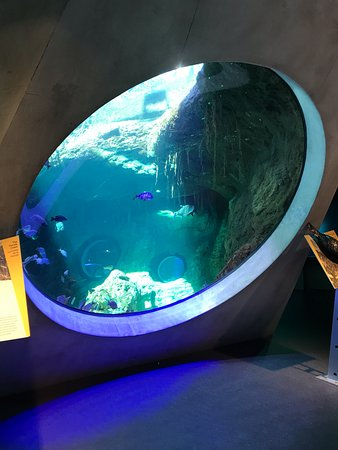 tanques marinhos picture of phillip and patricia frost museum of rh tripadvisor com