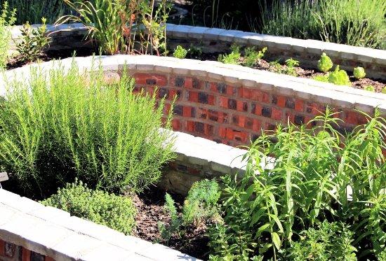 Southern Cross Guesthouse: Herb Garden