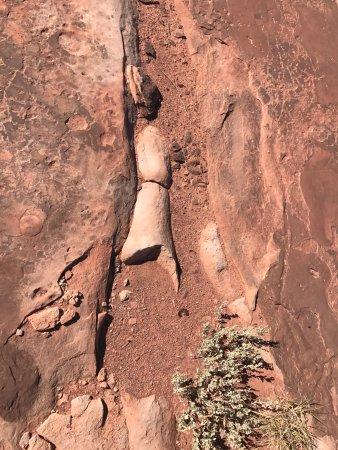 ทูบาซิตี, อาริโซน่า: Alguns fósseis ainda podem ser encontrados