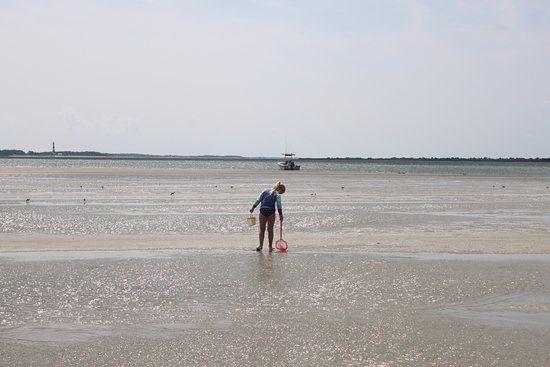 """Crystal Coast Ecotours - Private Tours: A stop on """"sand dollar"""" island while the tide was out: We found tons of sand dollars & a sea urc"""