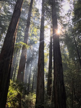 Mill Valley, CA: Muir Woods National Monument - During the NorCal fires.