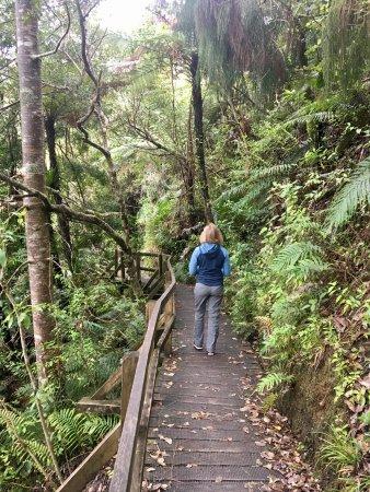 Arataki Visitor Centre: Walking Trail