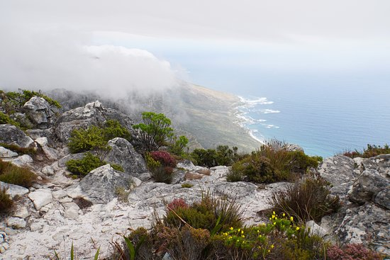 Table Mountain Aerial Cableway: On Top of Table Mountain