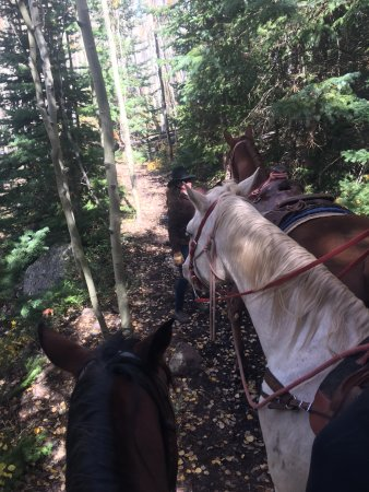 Snowmass, CO: the horses were wonderful :)