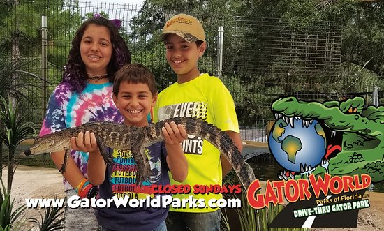 Wildwood, FL: Hold a Gator at GatorWorld Parks of FL