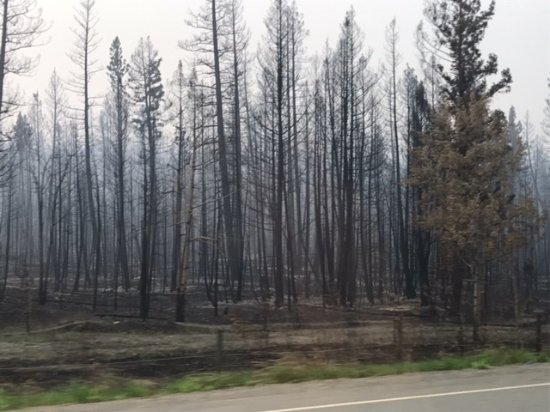 Prince George, Kanada: verbrannt