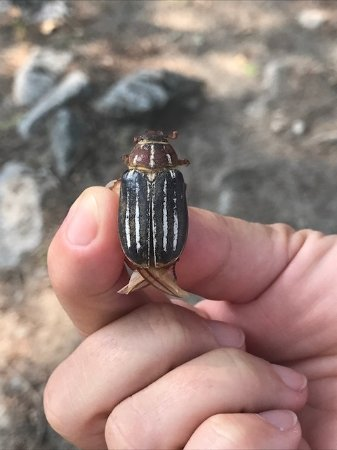 Chilcotin, Canada : Insekt