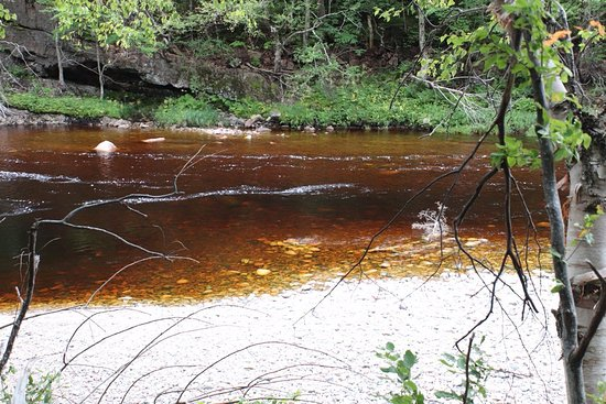 Salmon Pools Trail: Brown water