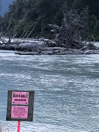 Bella Coola, كندا: River