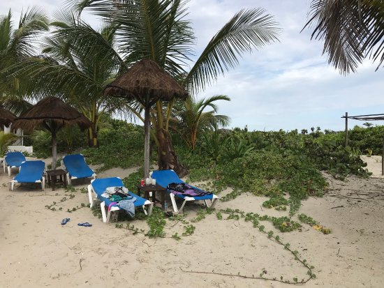 Almaplena Eco Beach Resort Reviews